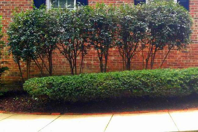 After Pruning Project