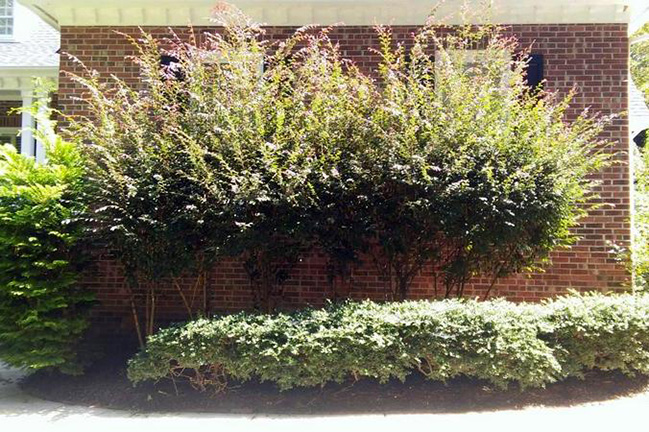 Before Pruning Project