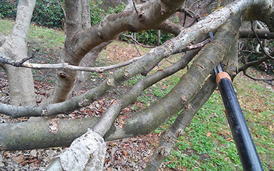 Tree Pruning – Part 1